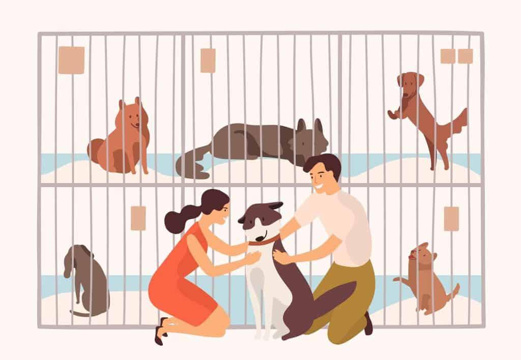 centro de adopción de animales 1