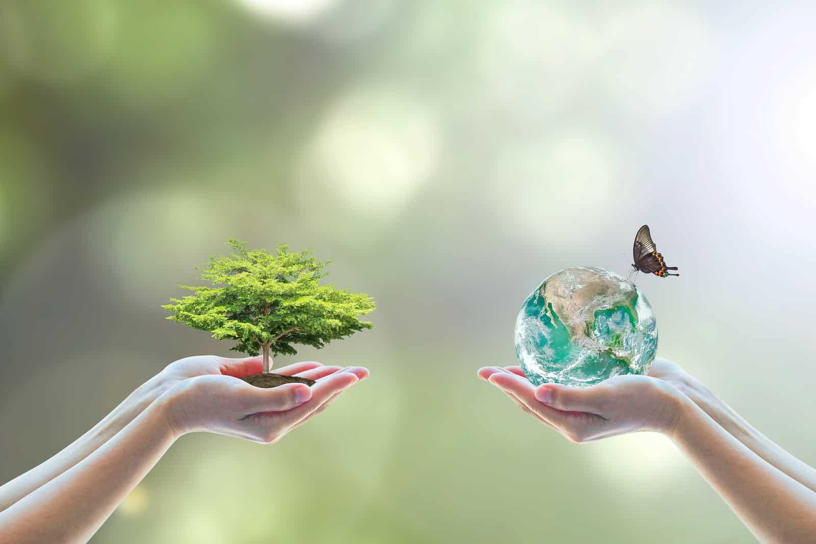 blog de medio ambiente