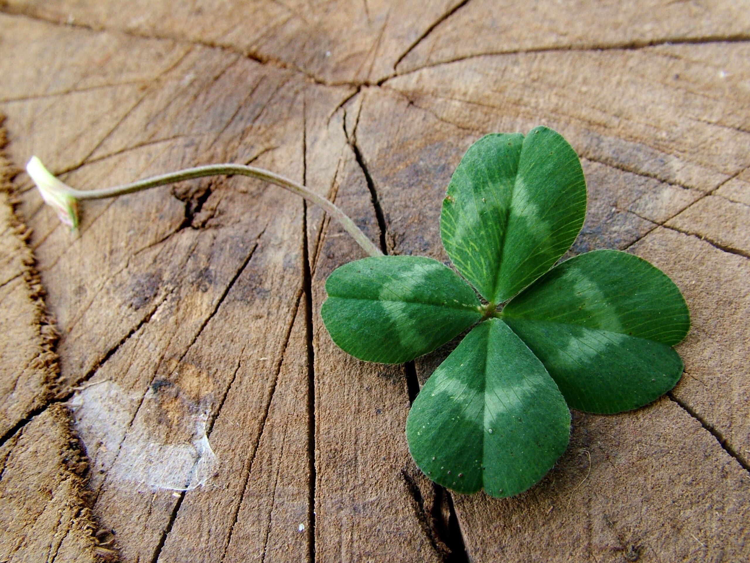 Supersticiones en la lotería